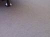 Čistenie, tepovanie kobercov v Žiline